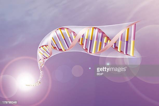 Genetics Dna Double Helix Strand With Its SubUnits The Nucleobases Adenine Thymine Cytosine And Guanine Yellow Pink Orange And Purple Respectively