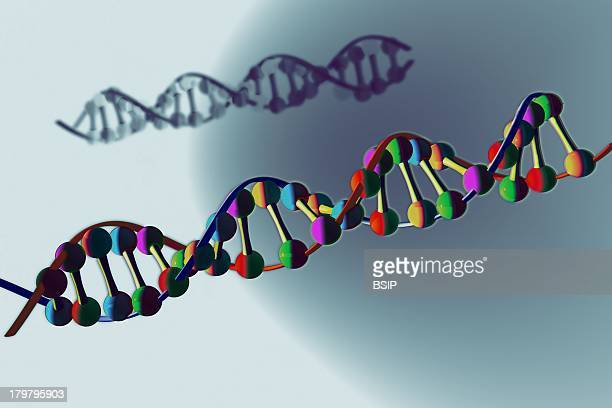 Genetics Dna Nucleic Acids On The Chromosome