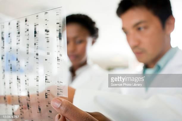 genetics research - pesquisa genética - fotografias e filmes do acervo