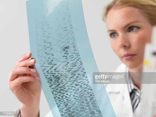genetics research - geneticist stock pictures, royalty-free photos & images
