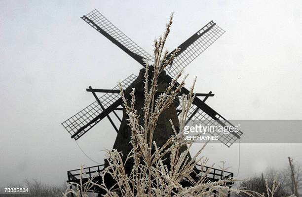 Geneva, UNITED STATES: Hoar frost is seen on wild grass 21 February 2007 near the old Fabyan Windmill in the forest preserve in Geneva, Illinois. The...