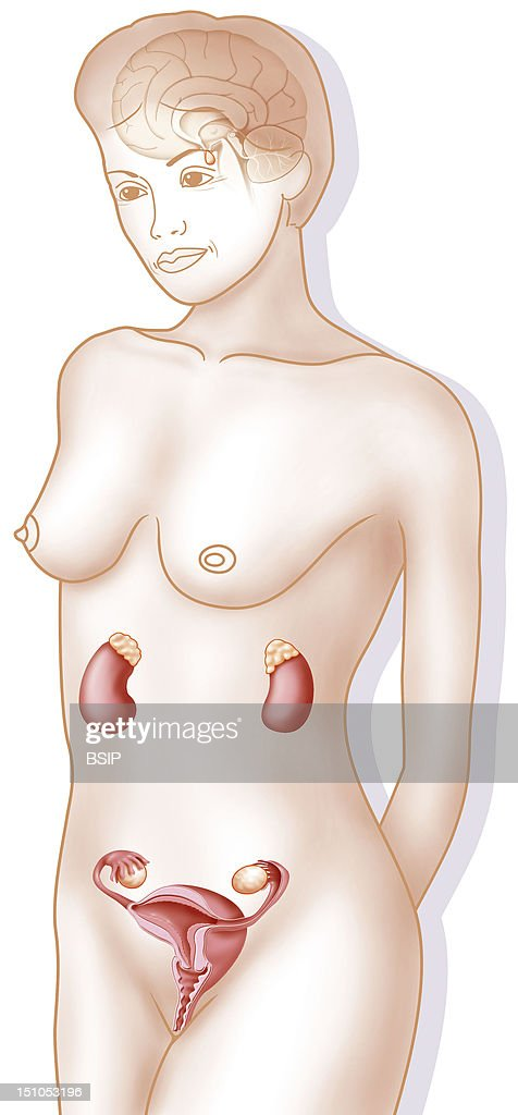Female Genitalia, Drawing : News Photo