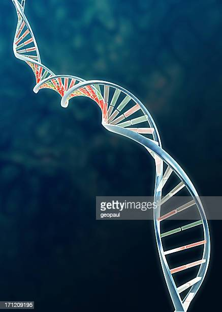 Genome - DNA double helix