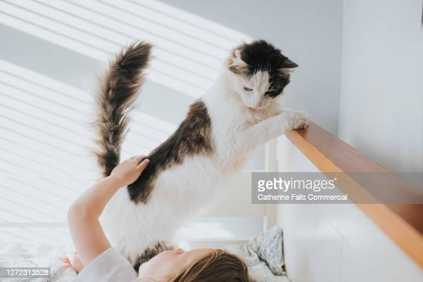 gentle cat looks down at an affectionate child on a bed - domestic cat stock pictures, royalty-free photos & images