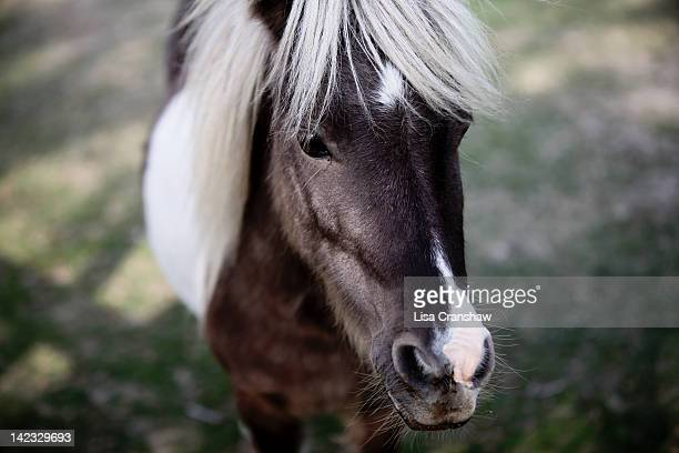 gentle pony - lisa cranshaw stock pictures, royalty-free photos & images