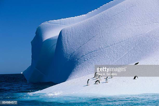 gentoo and chinstrap penguins on iceberg - chinstrap penguin stock pictures, royalty-free photos & images