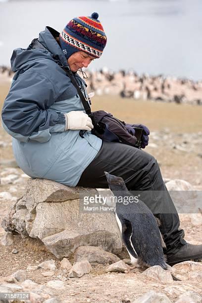 Gentoo Penguin (Pygoscelis papua) with Tourist