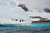 gentoo penguins an iceberg antarctica penguins
