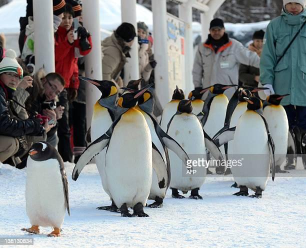 Gentoo penguins walk on a road covered with snow as visitors watch at the Asahiyama Zoo in Asahikawa city Japan's northern island of Hokkaido on...