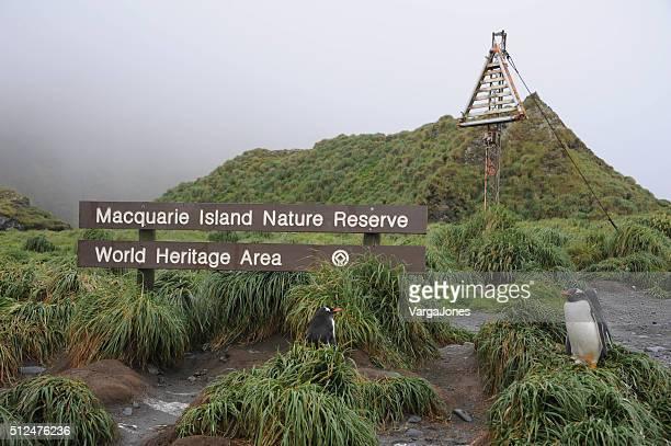 GentooPenguins, Macquarie Island