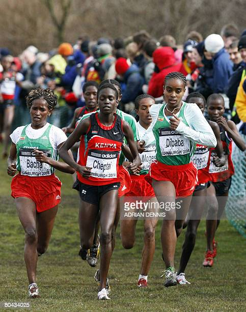 Genzebe Dibaba of Ethiopia leads the pack during the Junior Women's cross country race in the 36th IAAF World Cross Country Championships in Holyrood...