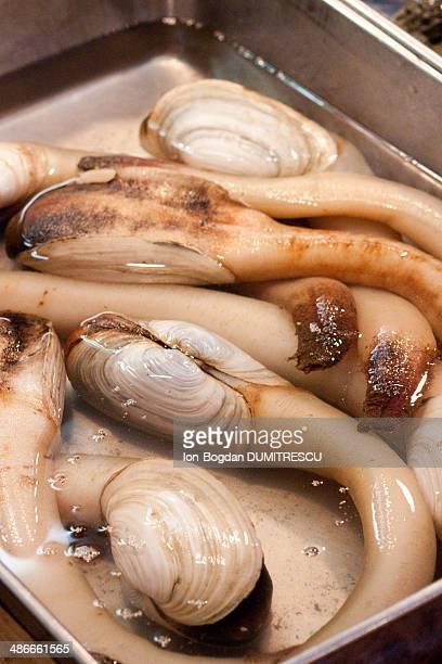 Geoduck clams