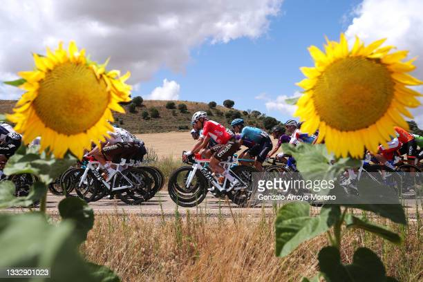 Geoffrey Bouchard of France and AG2R Citröen Team Red Mountain Jersey & The Peloton passing through a sunflowers field during the 43rd Vuelta a...
