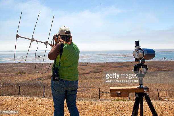 Geological Survey researcher, Gena Bentall, tracks a tagged sea otter on the Pacific coast along highway 1, using radio waves, binoculars and a...