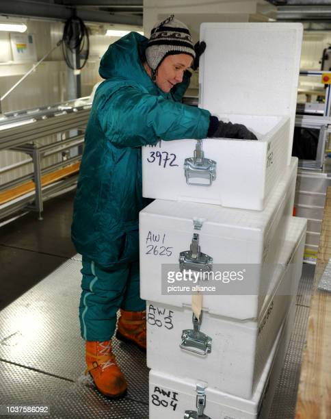 Geologist and glaciologist of the Alfred Wegener Institute for Polar and Marine Research Ilka Weikusat searches for a sample of ice in Bermerhaven...