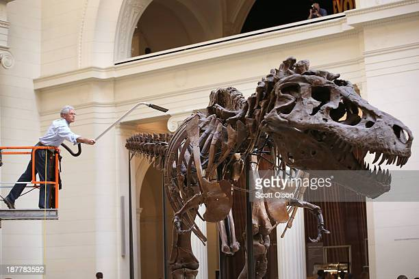 Geologist Bill Simpson cleans Sue a 67millionyearold Tyrannosaurus Rex on display at the Field Museum on November 12 2013 in Chicago Illinois Sue is...