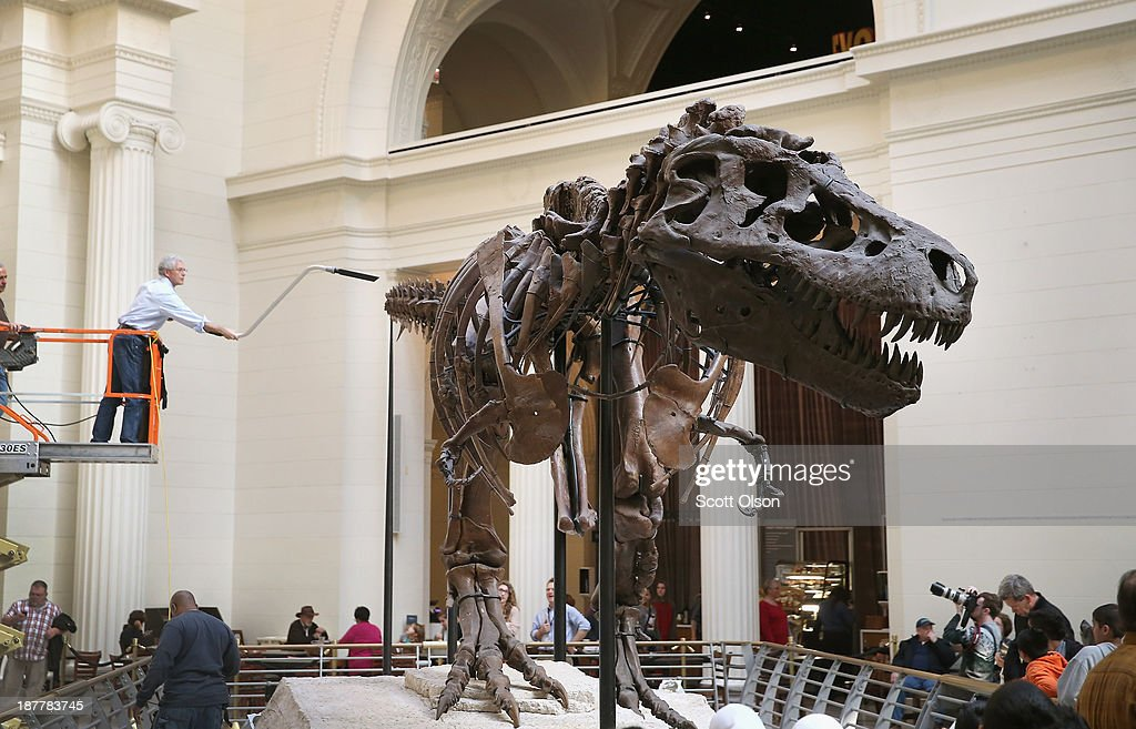 """Chicago's Field Museum Cleans Its Preserved T. Rex """"Sue"""" : News Photo"""