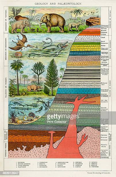 'Geology and Palaeontology' c1880 Diagram showing geological eras and periods with the rock strata associated with each as well as the types of flora...