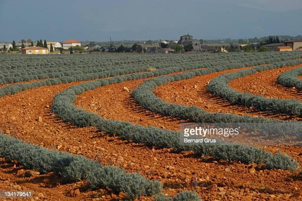 geometrical lavender field in autumn - bernard grua photos et images de collection