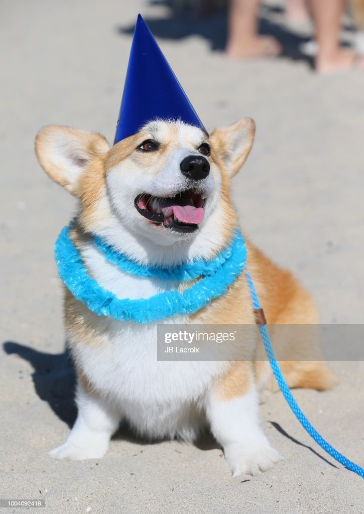 Pet Influencer Geordi La Corgi's 5th Birthday Party