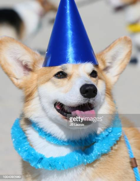 Geordi La Corgi celebrates his 5th Birthday at Rosie's Dog Beach on July 22 2018 in Long Beach California