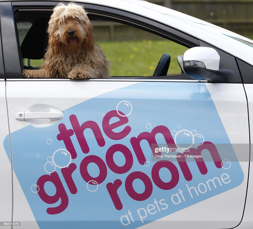 Pets at home groom room