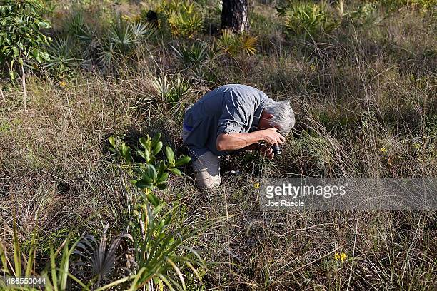 George D Gann chief conservation strategist of the Institute for Regional Conservationtakes a picture of the endangered Everglades Crabgrass in the...