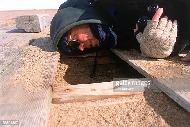 George Divoky checks a breeding shelter he constructed August 2001 on Cooper Island Alaska Ornithologist George Divoky has journeyed to Cooper Island...