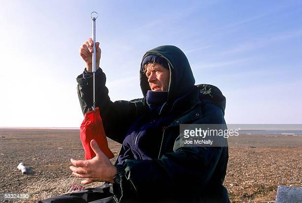 George Divoky weighs a black guillemot inside a bag August 2001 on Cooper Island Alaska Ornithologist George Divoky has journeyed to Cooper Island...