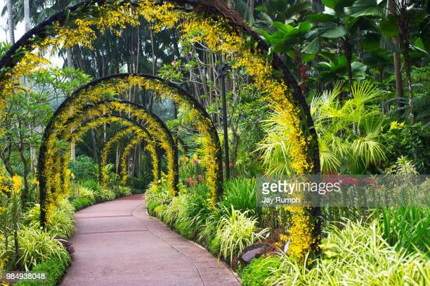 george in the jungle - botanical garden stock pictures, royalty-free photos & images