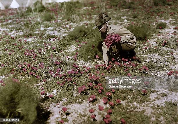 George 'Pop' Redding an Australian soldier from the 8th Light Horse Regiment is picking flowers during the war against the Ottoman Empire Middle...