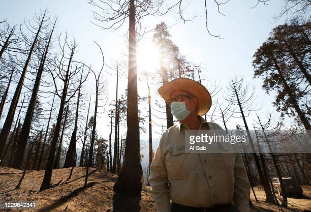 George Powell, Sequoia National Forest ecosystem manager walks through the fire-ravaged mountainside in the McIntyre Grove, one of the monument areas...