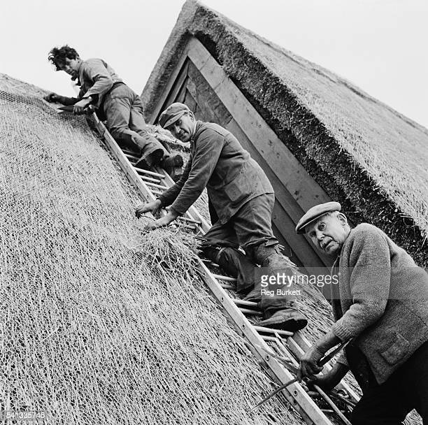 George, Stanley, and Stephen Shelley, three generations of roof thatchers, posing on a ladder, 9th March 1967.