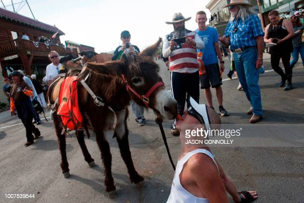 George Zack of Broomfield Colorado celebrates his second place finish in the 70th Annual Burro Days Race by sharing a carrot with his burro Jacko in...