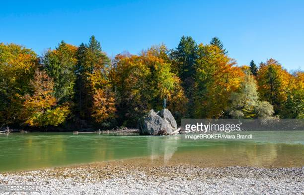 georgenstein, rock with holy picture in the river isar with autumn colouring, landscape conservation area isartal, near baierbrunn, upper bavaria, bavaria, germany - colouring bildbanksfoton och bilder