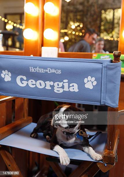 Hotel For Dogs Los Angeles Premiere Red Carpet Stock Photos And