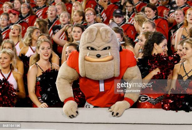 Georgia Bulldog mascot Hairy Dawg during the college football game between the University of Georgia Bulldogs and the Samford Bulldogs on September...