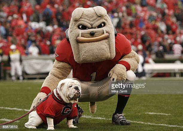 Georgia Bulldogs mascots Hairy Dawg and UGA VII pose together for photos before the game against the Georgia Tech Yellow Jackets at Sanford Stadium...