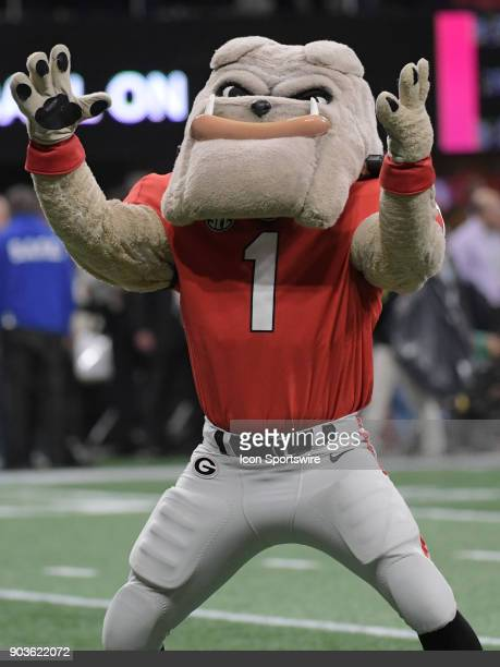 Georgia Mascot 'Hairy Dawg' before the College Football Playoff National Championship Game between the Alabama Crimson Tide and the Georgia Bulldogs...