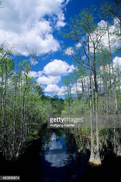 USA Georgia Okefenokee Swamp Park Bay Trees Cypress Trees Clouds Reflecting