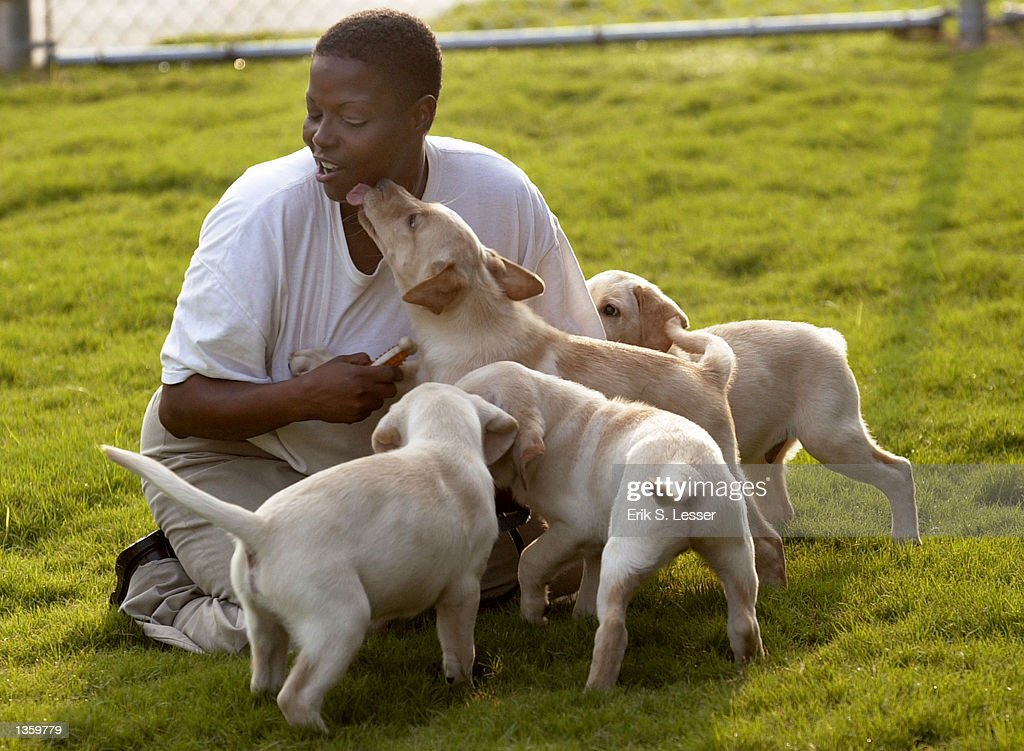 inmate guide dog training pictures getty images rh gettyimages fr Puppy Dog Training Golden Retrievers as Guide Dogs