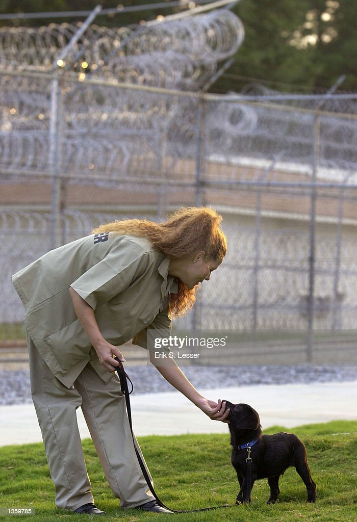 inmate guide dog training pictures getty images rh gettyimages de Dog Training Gear Guide Dog Puppy
