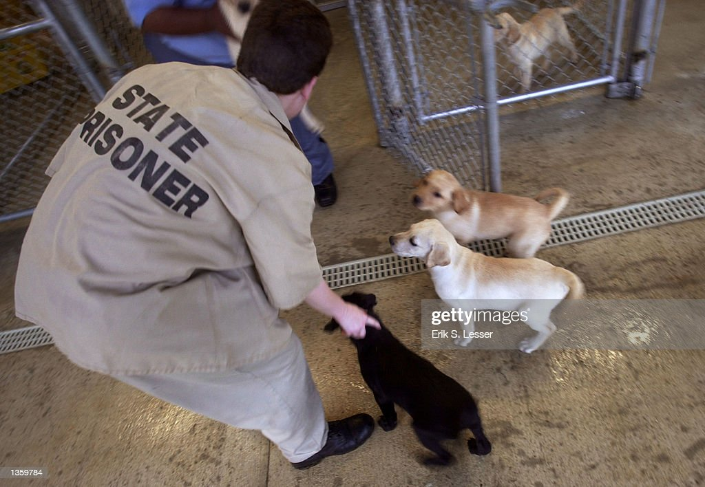 inmate guide dog training pictures getty images rh gettyimages com Golden Retriever Guide Dogs Golden Retriever Guide Dogs