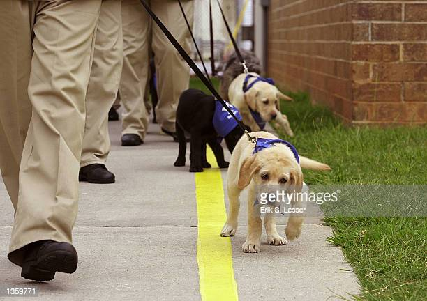 Georgia women prison inmates lead their Labrador puppies during guide dog training at Metro State Prison August 27 2002 in Atlanta Georgia The IMPACT...