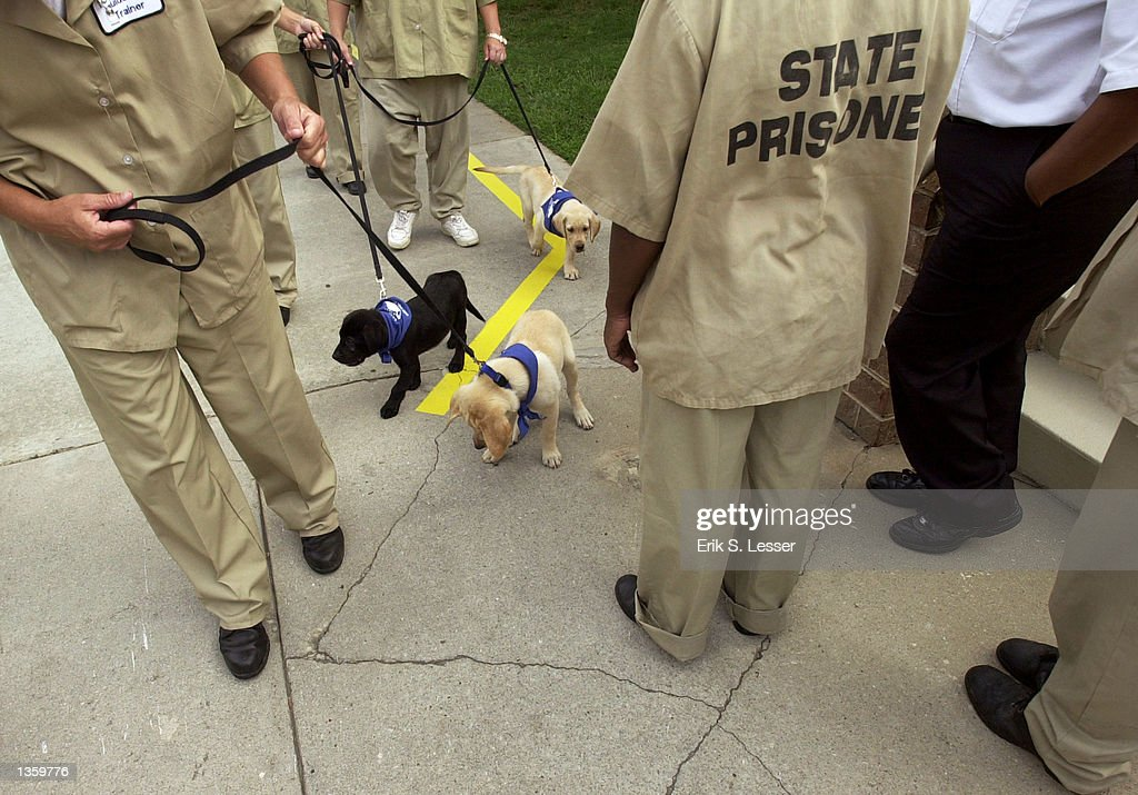 inmate guide dog training pictures getty images rh gettyimages com Service Dog Training Dog Training Gear