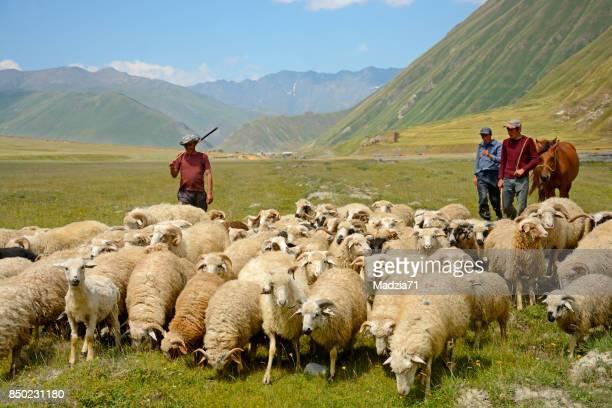 Georgian shepherds