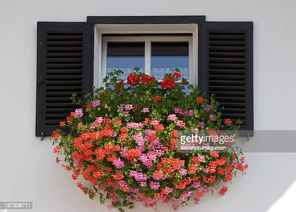 Geranium Flower Window Box