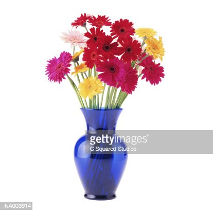 Gerbera Daisies In A Blue Vase Stock Photo Getty Images