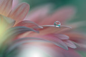 Gerbera daisy .Abstract macro photo with Flowers and water drops.Artistic Background for desktop. Flowers made with pastel tones.Tranquil abstract closeup art photography.Print for Wallpaper.Floral fantasy design.