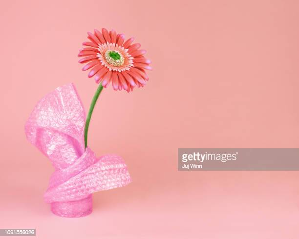 Gerbera daisy wrapped in bubble wrap